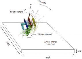 Figure from our paper on probing protein orientation near charged surfaces.