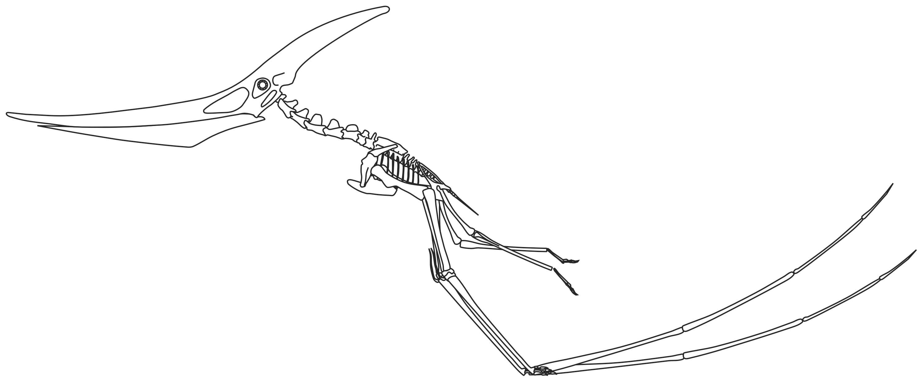 "Pterosaur Skeleton in ""vaulting"" position. Image from ""On the Size and Flight Diversity of Giant Pterosaurs, the Use of Birds as Pterosaur Analogues and Comments on Pterosaur Flightlessness"", Witton and Habib"